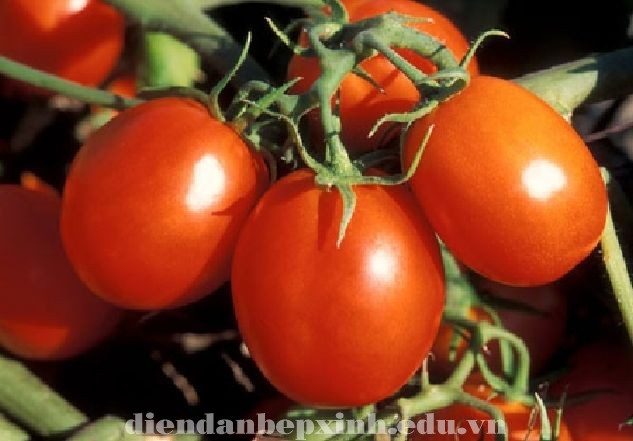 Tại sao cà chua giúp giảm đột quỵ  ?