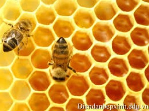 mat-ong